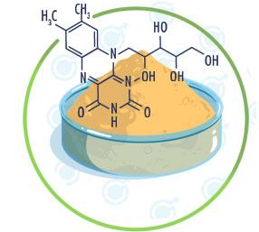 Riboflavine Vitamine B2